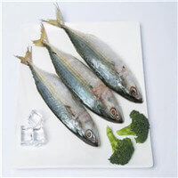 """frozen indian mackerel"""